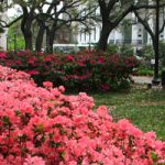 Gardens of Savannah